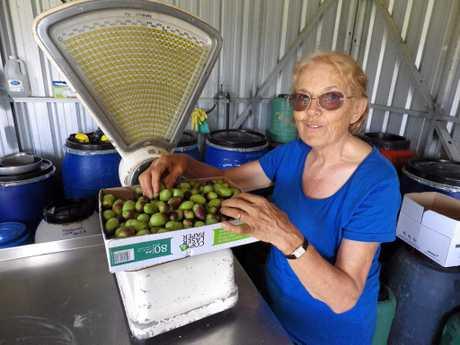 Leo olive farm at Mongogarie. Maria Leo checks the olives.