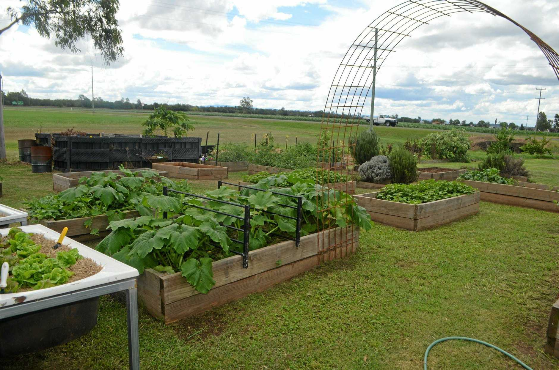 GOING STRONG: Three years later, St Mary's sustainability garden is benefiting the school in more ways than one. Photo Francis Witsenhuysen / Gatton Star