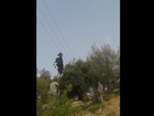 A team of tradesmen rescue a goat dangling by its horns on a power line.