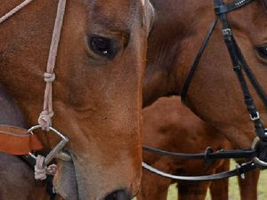 Horse vet convicted over hendra scare