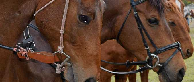 HENDRA: A Queensland vet has been convicted of failing to meet safety standards while attending a horse that was not vaccinated against hendra.
