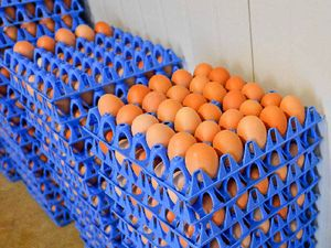 VIDEO | Egg eaters misled on 213 million free range eggs