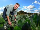 GREAT GREENS: Gatton broccoli farmer and Rugby Farm owner Matt Hood is proud to have his produce featured on My Kitchen Rules.