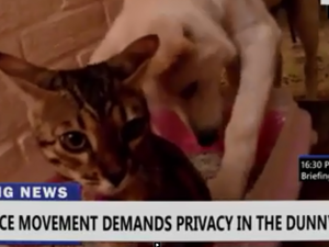 WATCH: Cats fight for right to poo in private