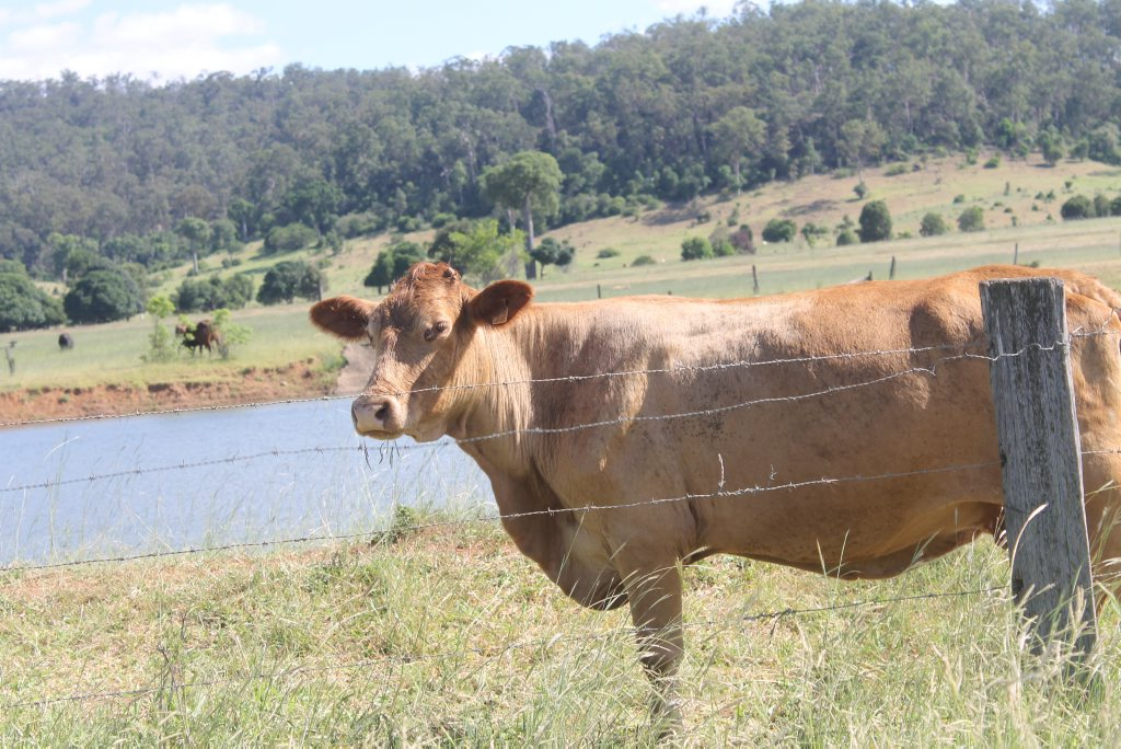 An academic has called for a study into the Lockyer Valley's water supply as farmers face changes to water allocations.