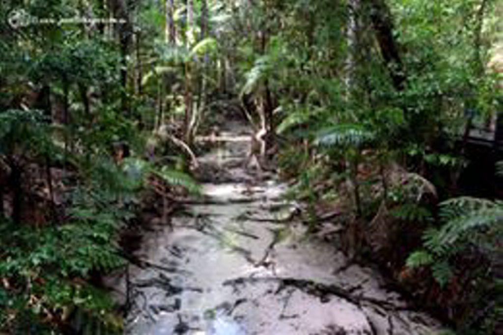 Wanggoolba Creek, Central Station Fraser Island.