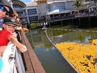How a dog won the Sunshine Coast Duck Race