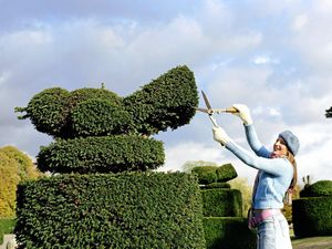 Tips on pruning for more healthy and colourful plants