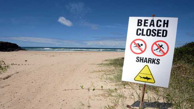 WARNING: A number of sharks have been spotted in the Ballina and Lennox Head areas over the weekend.