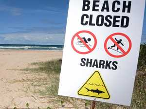 Beach evacuated after 2m bull shark sighting