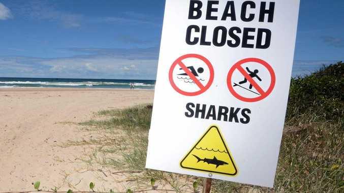 Beach evacuated after 2m bull shark sighting