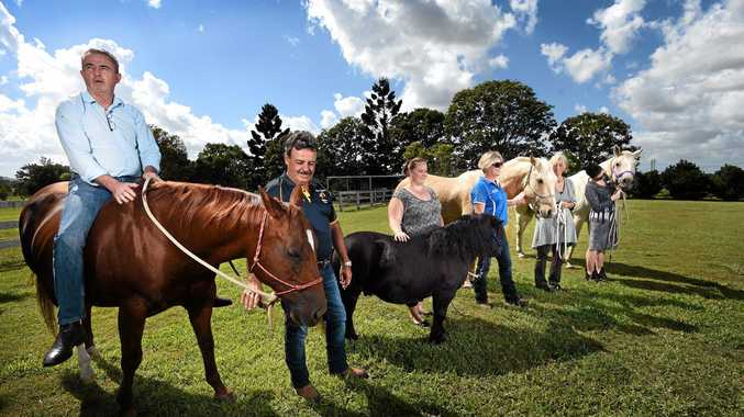 Page MP Kevin Hogan attends the official launch of the Northern Rivers Horses Helping Humans program.