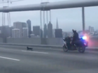 The Oakland-San Francisco Bay bridge closed as police chase a Chihuahua.