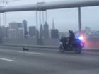 The Oakland-San Francisco Bay bridge closed as police chase a Chihuahua.