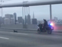 Dog shuts down San Francisco bridge