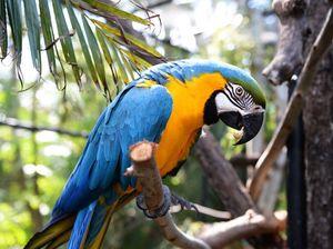 Rocky Zoo macaws