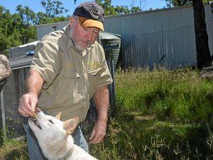 Durong dingo handler angered by dingo killings
