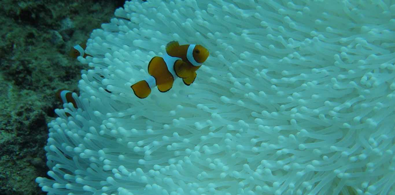 Bleaching is worst in the Great Barrier Reef's remote north. Morgan Pratchett/ARC Centre of Excellence for Coral Reef Studies,