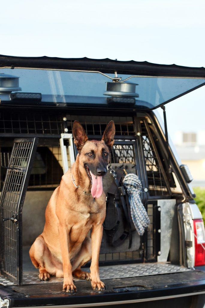 Arkie the police dog