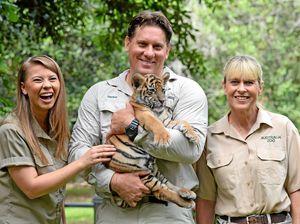 Meet Australia Zoo's purrfect new tiger cubs