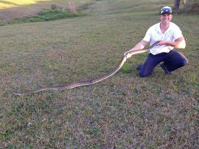 Sunshine Coast Snake Catcher Richie Gilbert holding up a coastal carpet python retrieved from a home at Lake McDonald