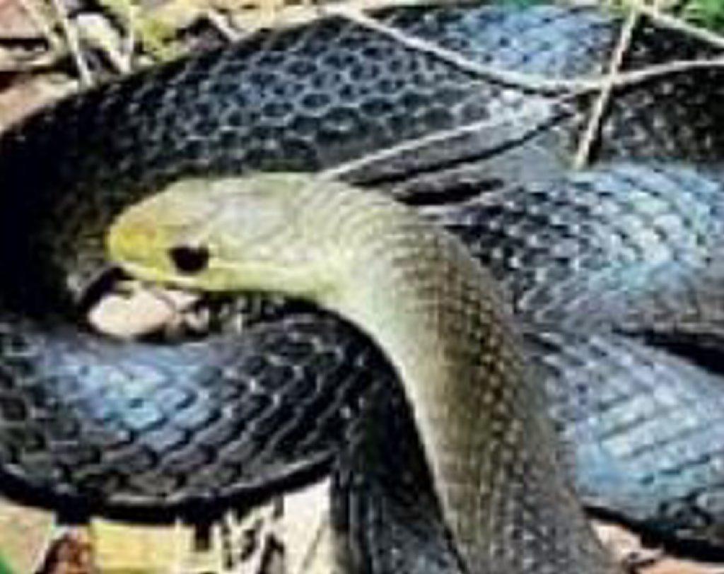 Marsh snake.