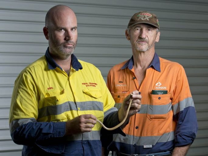 Gladstone snake catchers Kris Foster and Mike Boen with a two month old coastal taipan. Photo Paul Braven / The Observer
