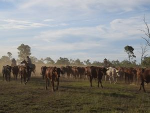 Petition started to stop sale iconic Aussie cattle property