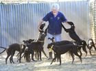 Goodna Greyhound trainer Keiron Butler has 14 puppies from one of his star bitches Eleazar.