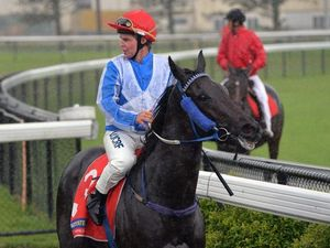 Classy Craiglea Amity impresses on wet day at track