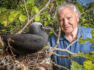 Attenborough reef doco is excellent