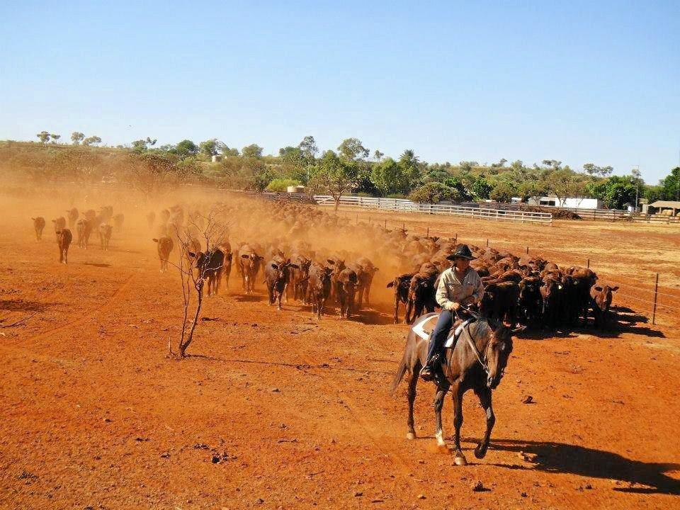 Carissa Gleeson worked in Western Australia on cattle stations.