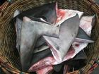 Greenpeace says it has evidence of 16 illegal cases of shark finning.