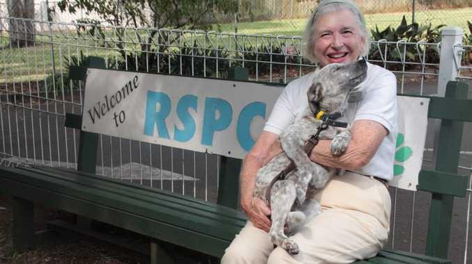 Friends of the RSPCA Toowoomba are holding a calendar competition to raise money for the shelter. Trish Hadden cuddles with one of the puppies at the shelter.