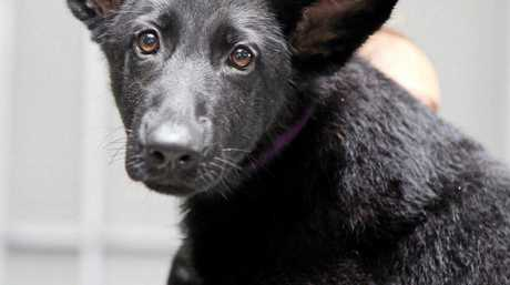 NSW Police launched a fundraising bid for the rights to name two of its new police puppies.
