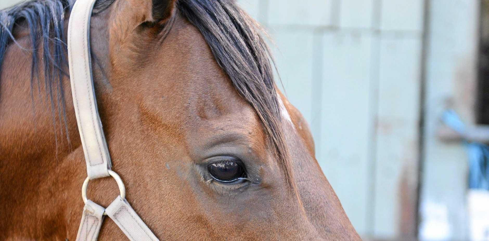 Hunter Kilner is hoping for a wet track for his horse Splitzer.