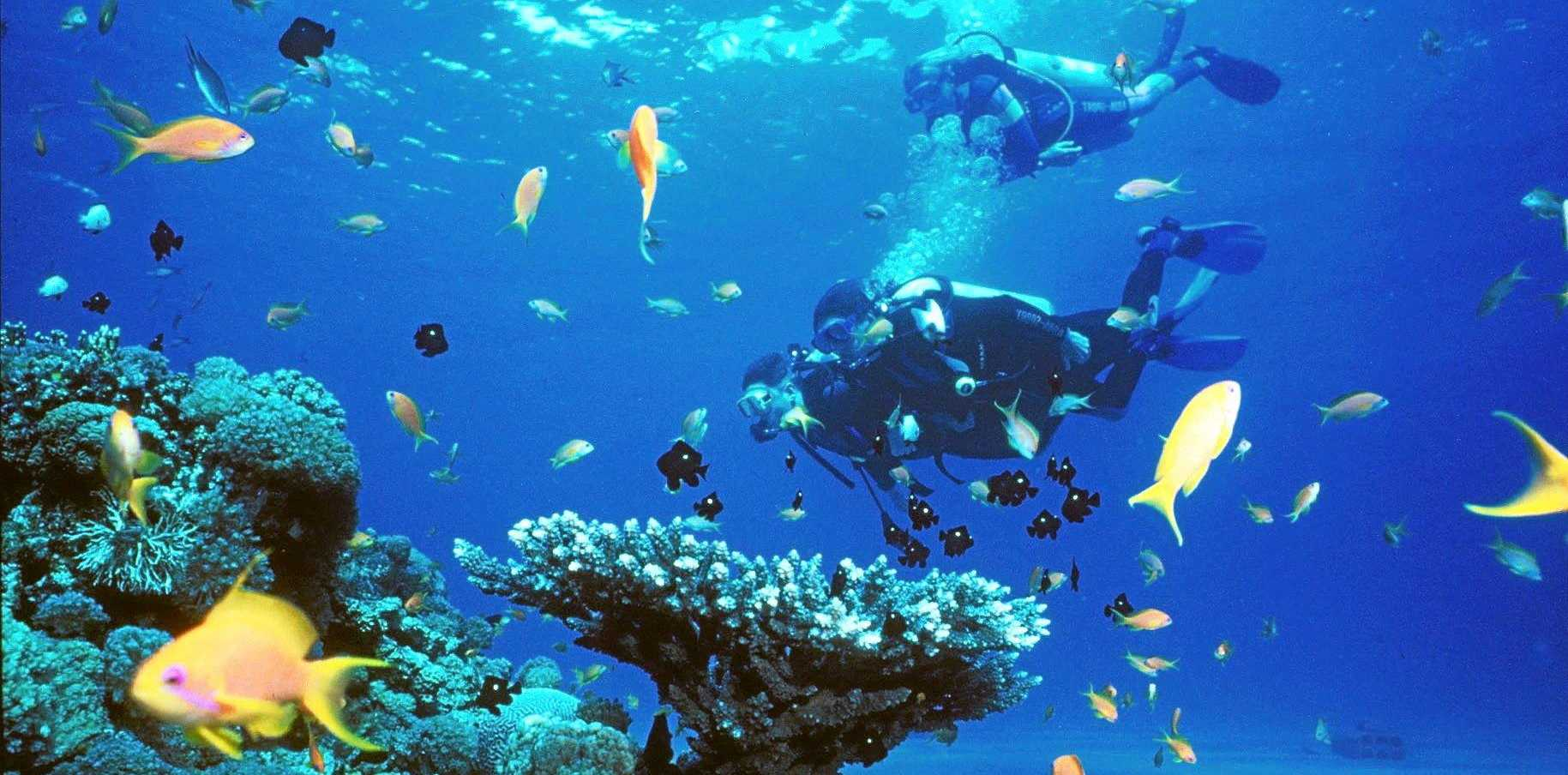 Perfect buoyancy takes many dives to achieve.