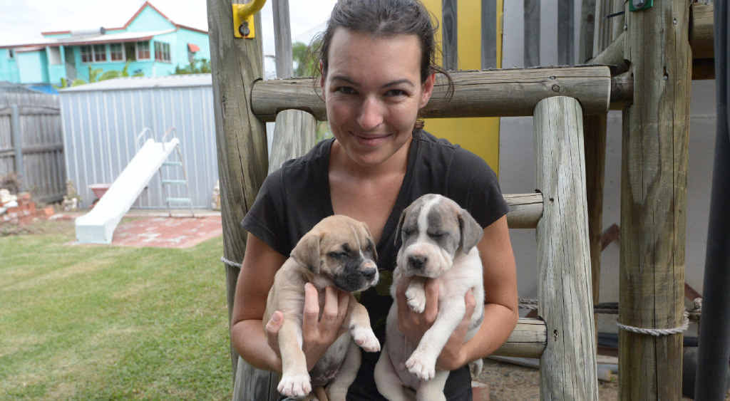 PUPPY LOVE: Samantha Lawson cared for five puppies which were found on the side of the Rockhampton-Yeppoon Rd.