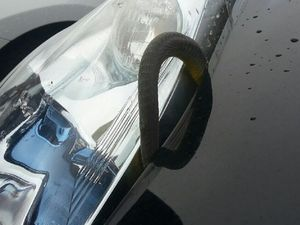 Snake found in Nissan Leaf imported from Japan