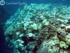 Bleached coral found at Ribbon Reef.