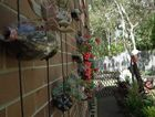 A hanging wall of plants in Star of the Sea's recycled garden.
