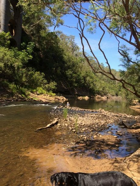 The Orara River adjacent to a blueberry farm. Local residents are concerned the farms will diminish already limited water supplies and that chemicals could contaminate the river. Photo: Robyn Cooke