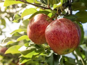 Picking the right apples for your garden