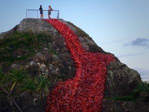 Currumbin RSL ANZAC Day Poppy Art Project 2016