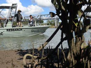 Mangrove Research on the Burnett