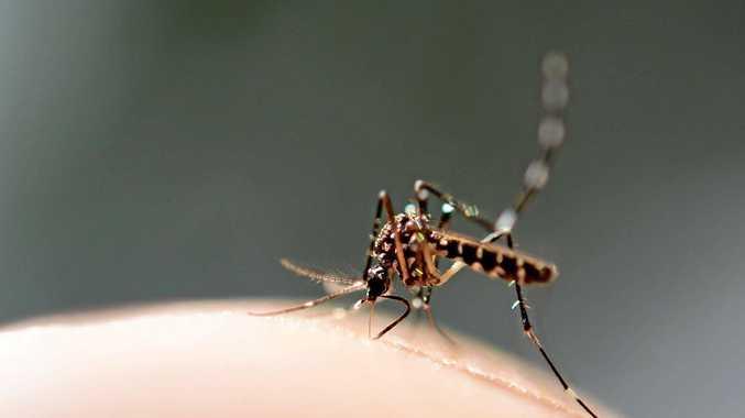 Ross River Virus on the rise