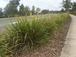 Turf to improve safety at Brightwater