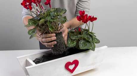 Step 6: Add mum's favourite plants.
