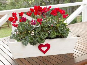 Build a timber planter box with love and glue for Mother's Day