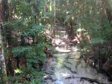I AM SUMMER: This is a photo of the pristine Wanggoolba Creek on Fraser Island. Taken by Lyn Day, 751 Bruce Highway, Chatsworth. Magic place.
